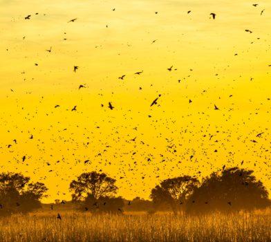 caza-de-paloma-min